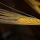 Golden Gleanings by MiLa