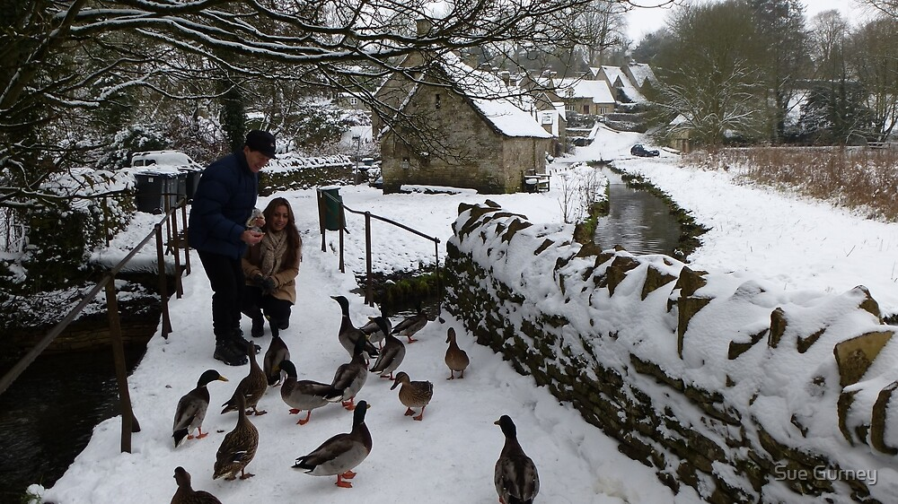 A welcome meal for the Bibury ducks by Sue Gurney