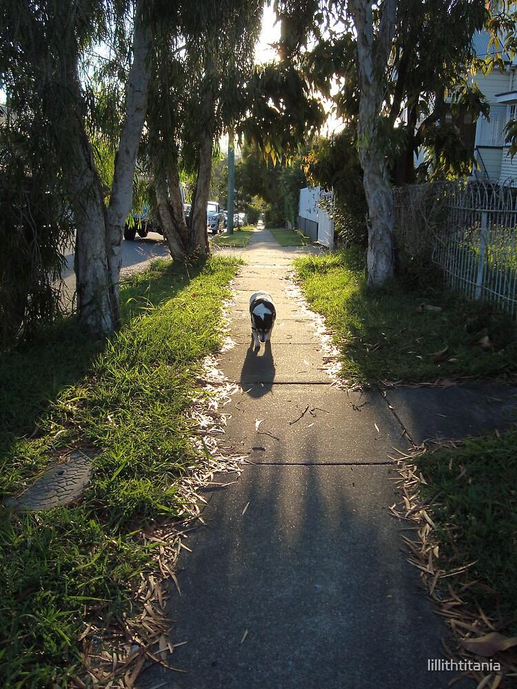 Daizy Mae Walk Am by lillithtitania