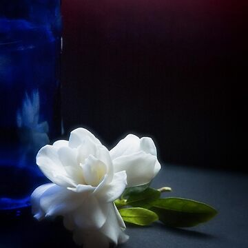 Gardenia flower and blue bottle by sil63