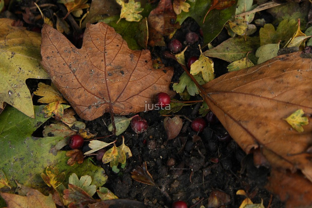 Autumn image by Anne-Marie by justa