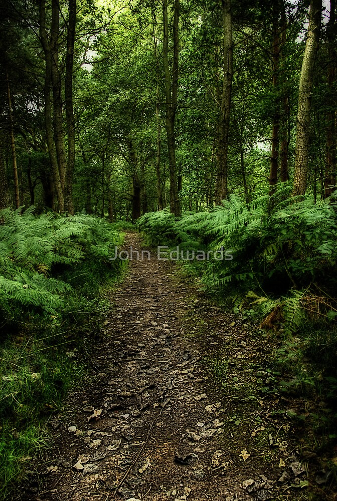 Seeswood by John Edwards