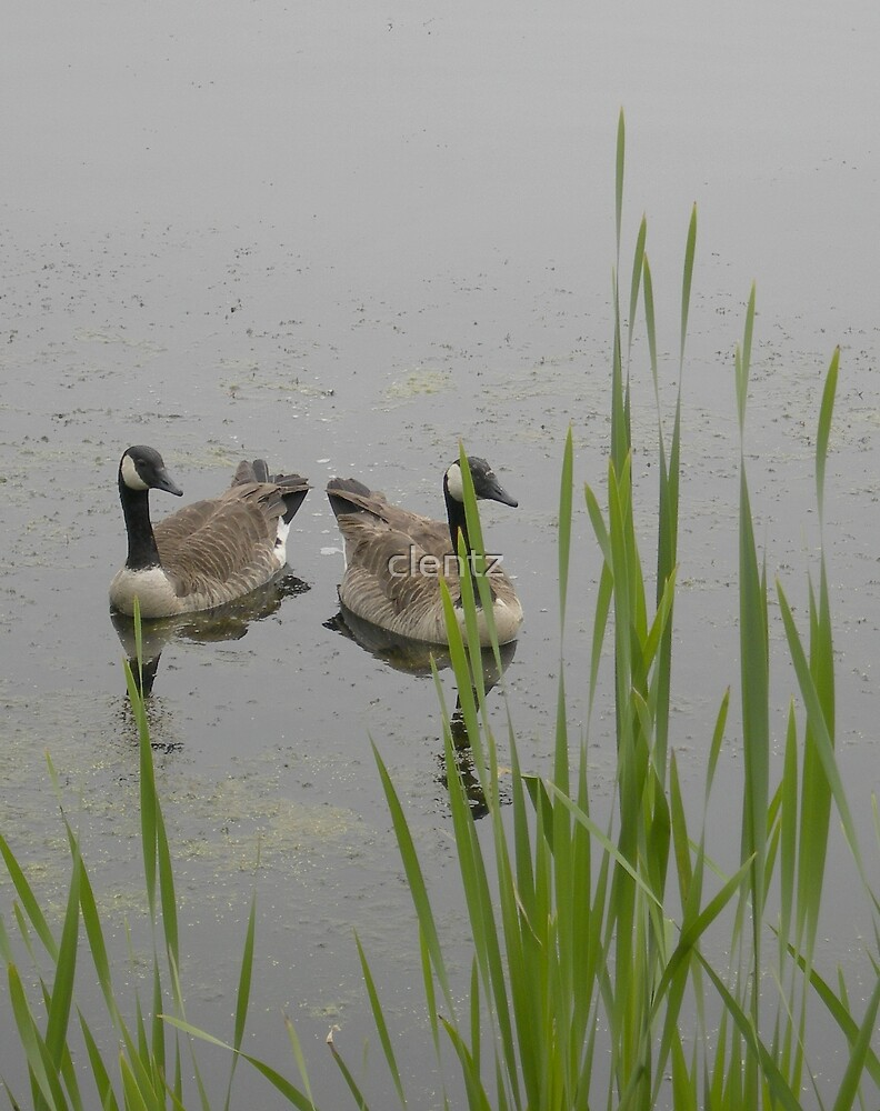 Dual Goose. by clentz