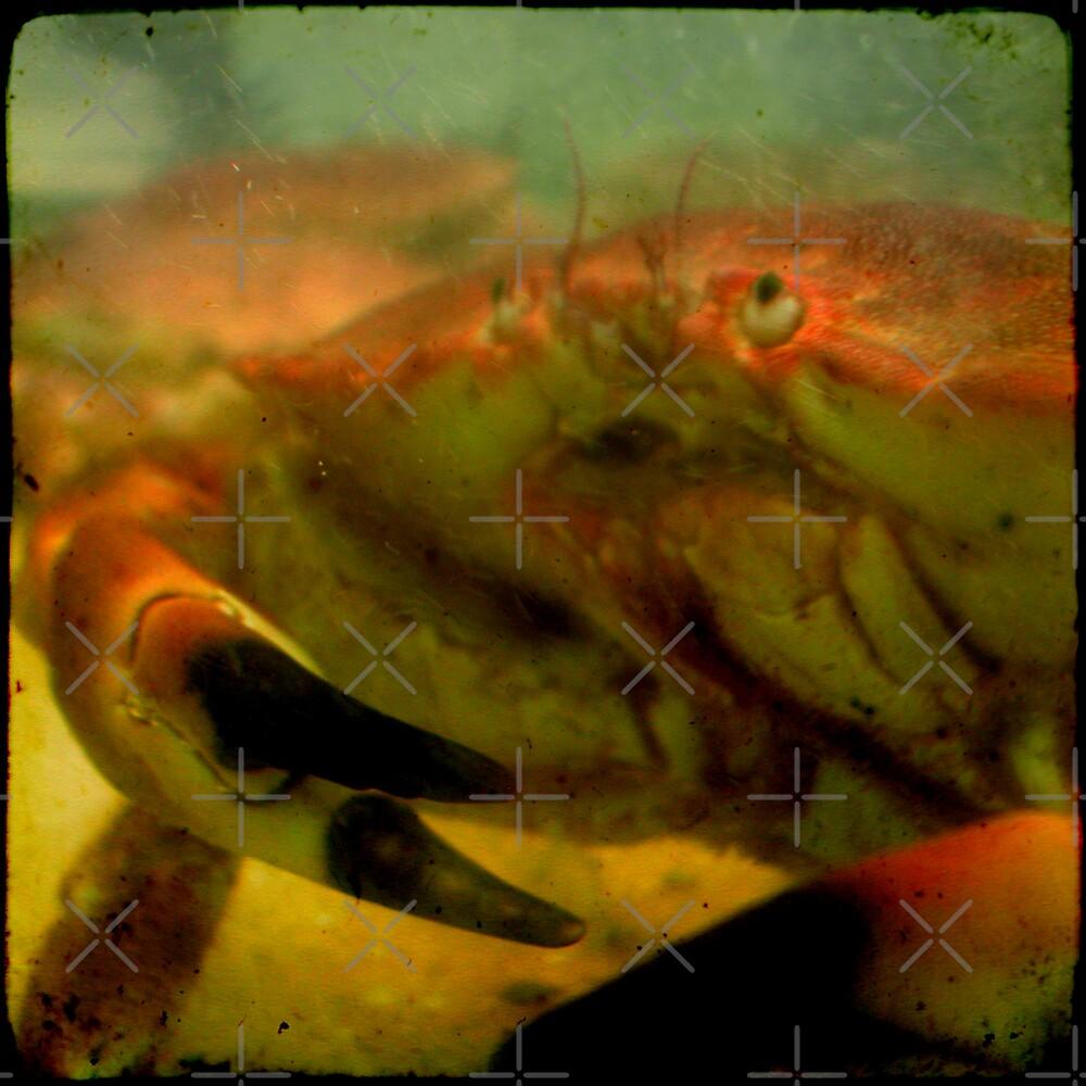 Feeling Crabby? by paulgrand