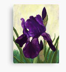 Purple Iris DP150530 Canvas Print