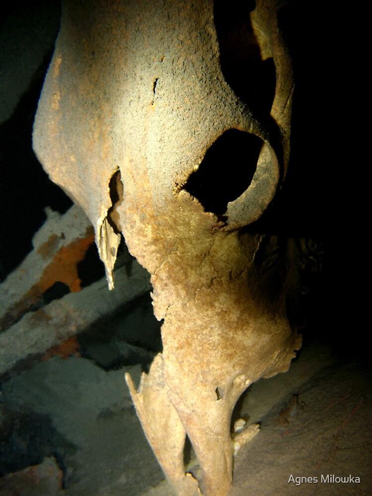 Cow skull by Agnes Milowka