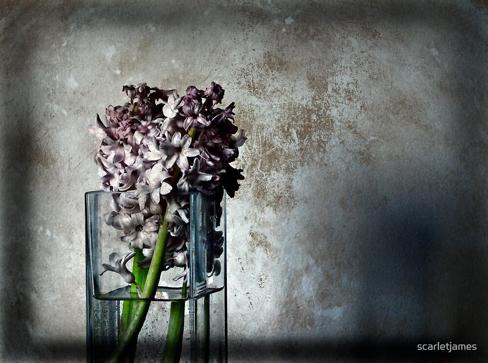 Hyacinths  by scarletjames
