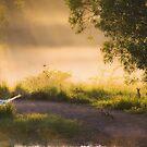 Misty Morn by Mel Brackstone