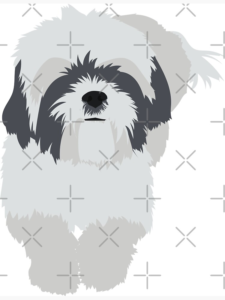 Shih Tzu | Sticker