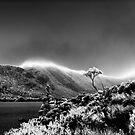 Snow on the mountain by Mel Brackstone