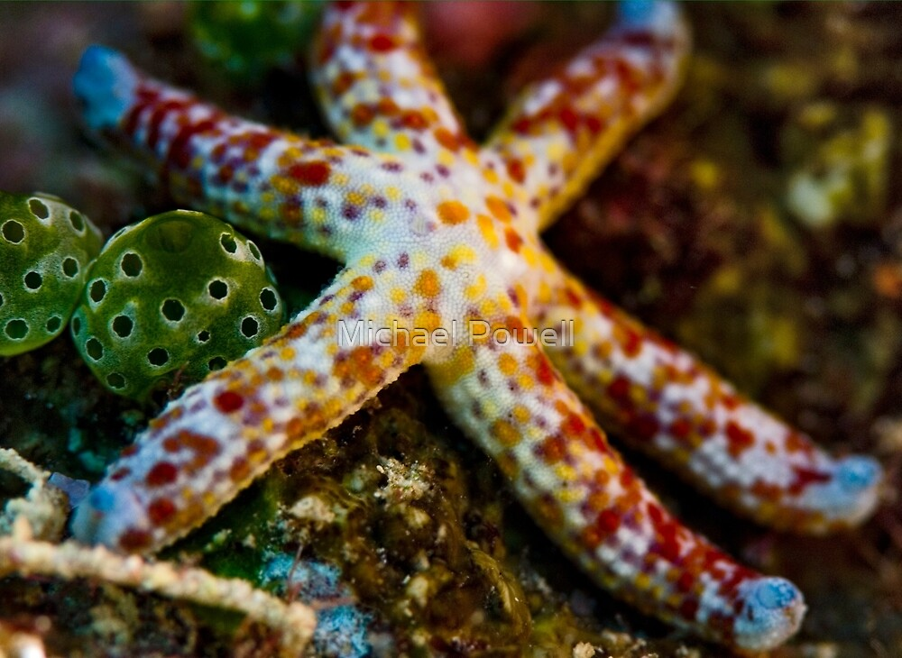 Colors of the Starfish by Michael Powell