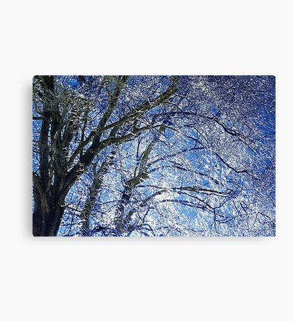 Ice Storm at Maple Canvas Print