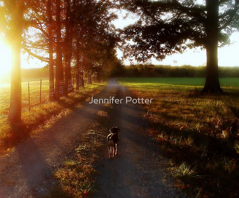 Evening Light by Jennifer Potter