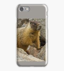 YELLOW-BELLIED MARMOT iPhone Case/Skin