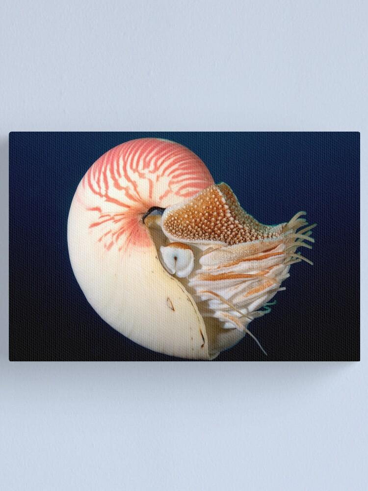 Alternate view of Chambered Nautilus Canvas Print