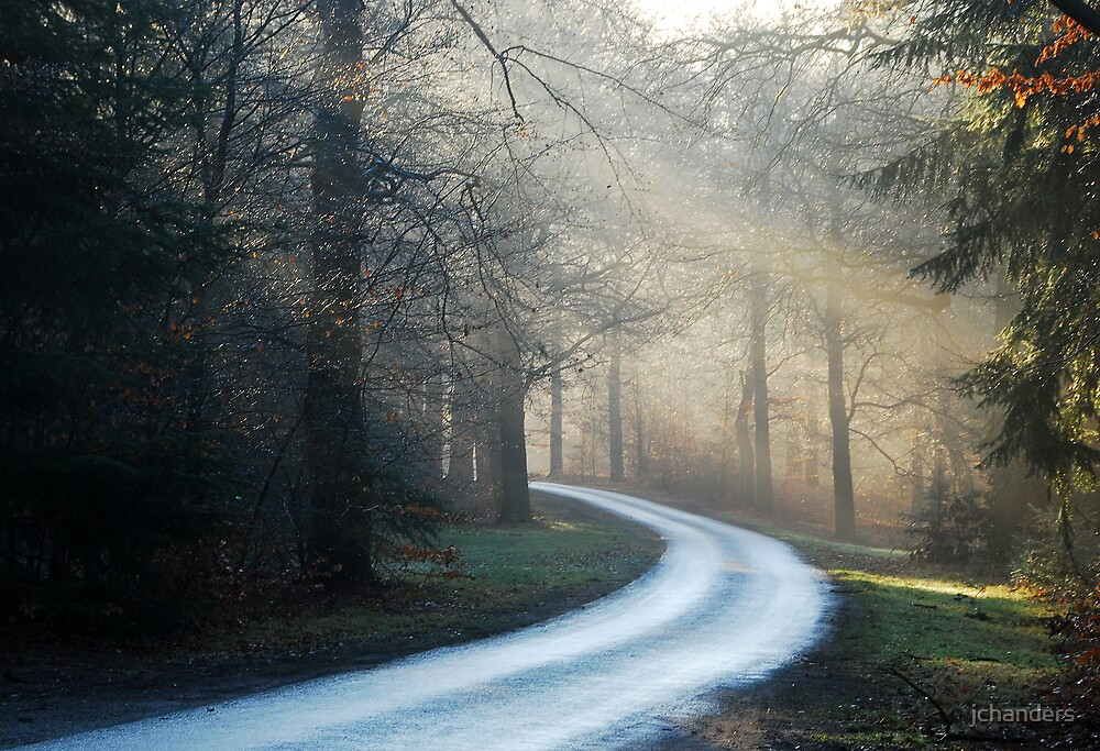 Touring through the hazy morning forest by jchanders