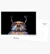 Mosquitolarva head Postcards