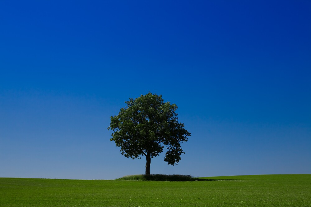 Solitary by Loren Zemlicka