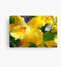 Yellow Orchid (cattleya) Canvas Print