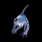 Crustacean planktonic larva by BioQuest Studios