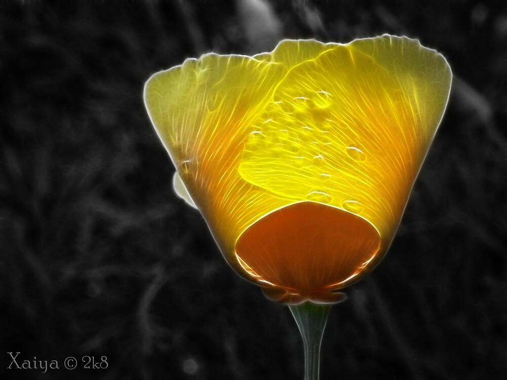 yellow amd orange by xaiya