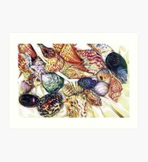 A collection of shells Art Print