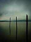 Three Seagulls - Peekskill Riverfront  by JHRphotoART
