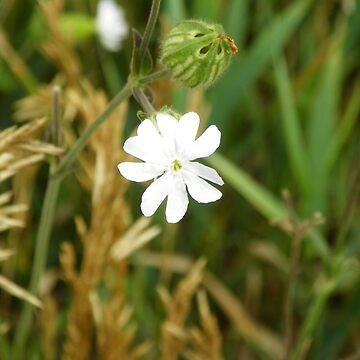 Flowers Bloom by auntslappy282