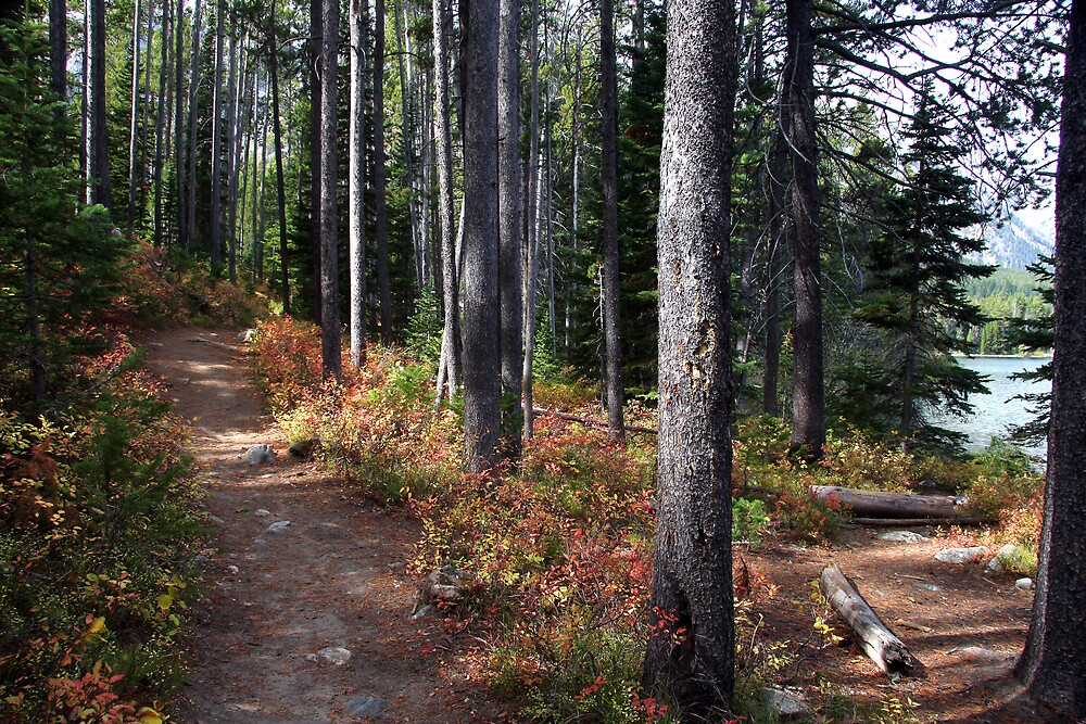 Leigh Lake Trail by noffi