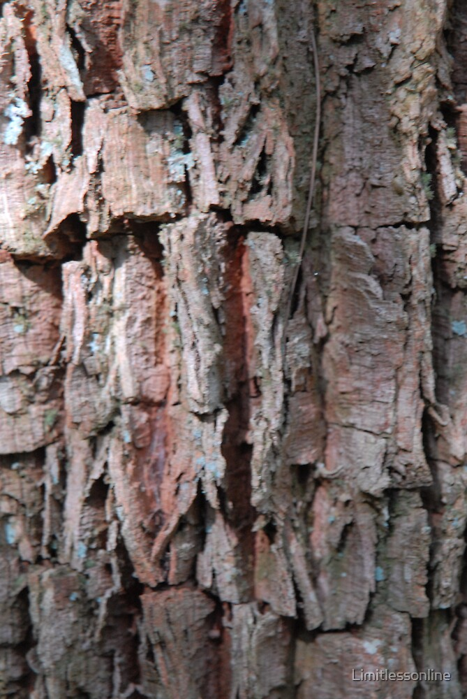 Tree Bark by Limitlessonline