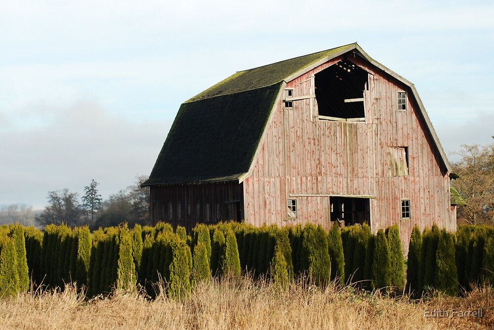 Old Red Barn by Edith Farrell