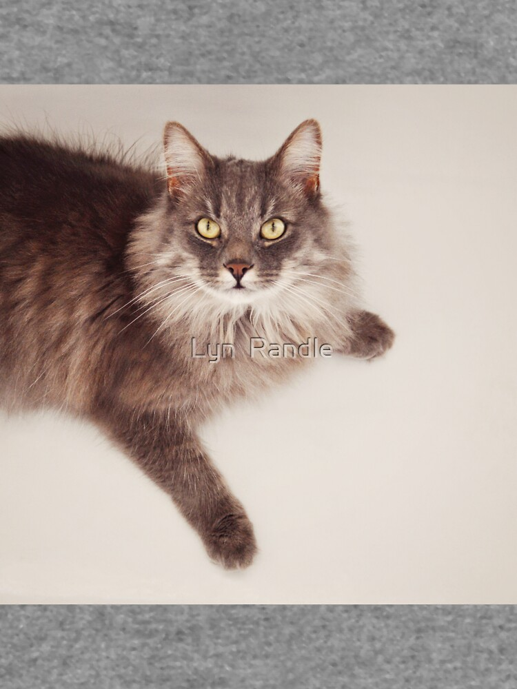 Semi long haired english blue male cat by flossyrandle