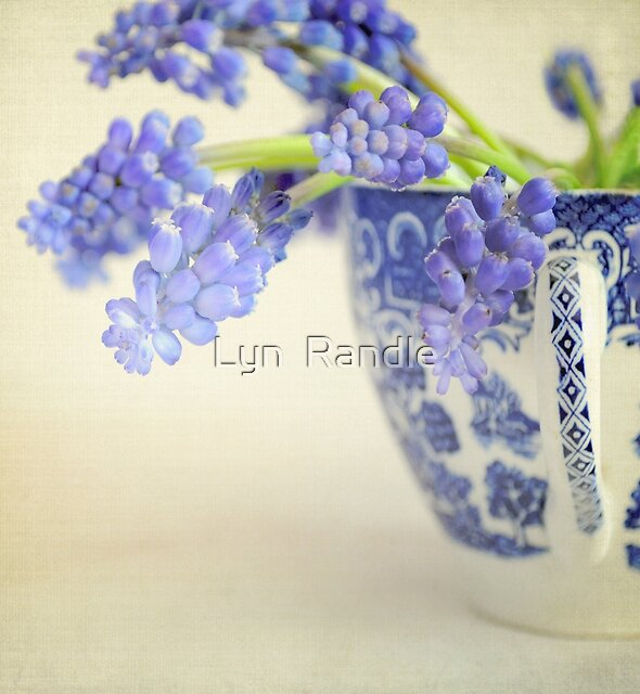 Little china blue by Lyn  Randle