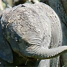 AFTER A MUD BATH, THE BABY ELEPHANT  - THE AFRICAN ELEPHANT – Loxodonta Africana by Magriet Meintjes