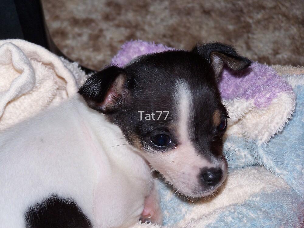 Snitzel-aka Puppins McSnitz by Tat77