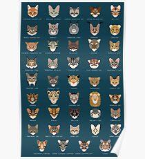 Cat Species Poster
