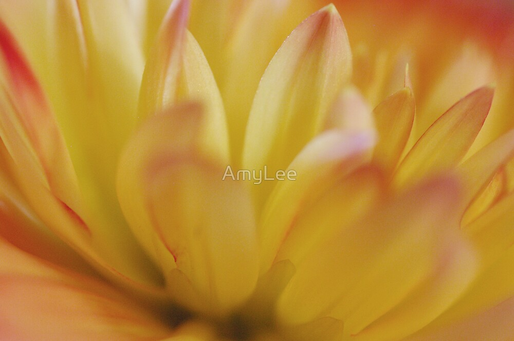 Untitled by AmyLee