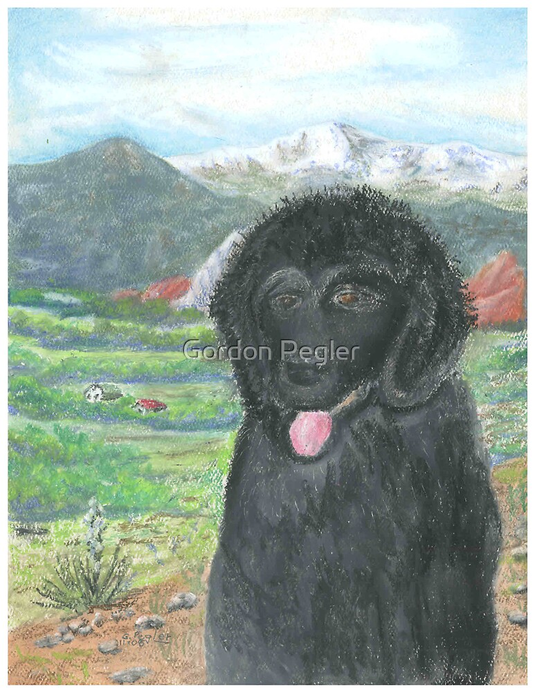 Newfoundland Pup with Pikes Peak Background by Gordon Pegler