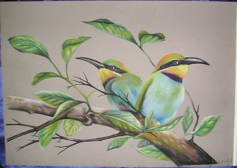 Rainbow Bee Eaters by Lyrebird