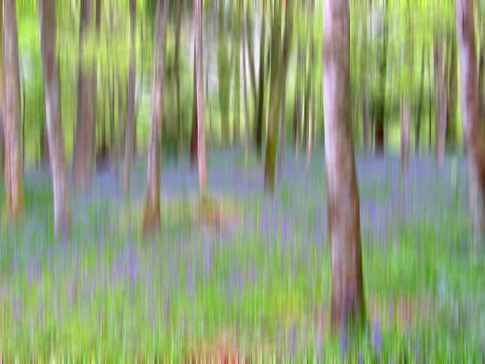 Blurbell Woods by Abigail Allardyce