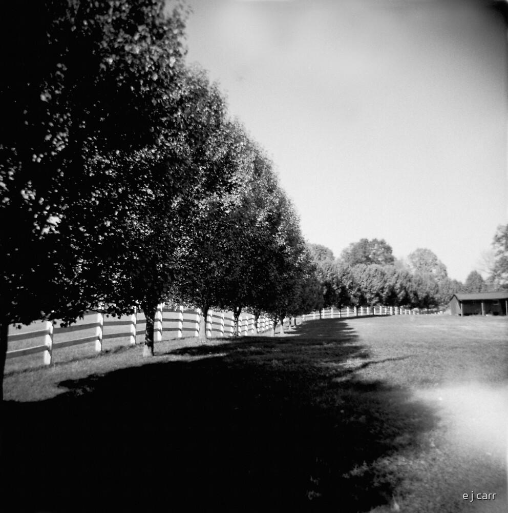 row trees by e j carr