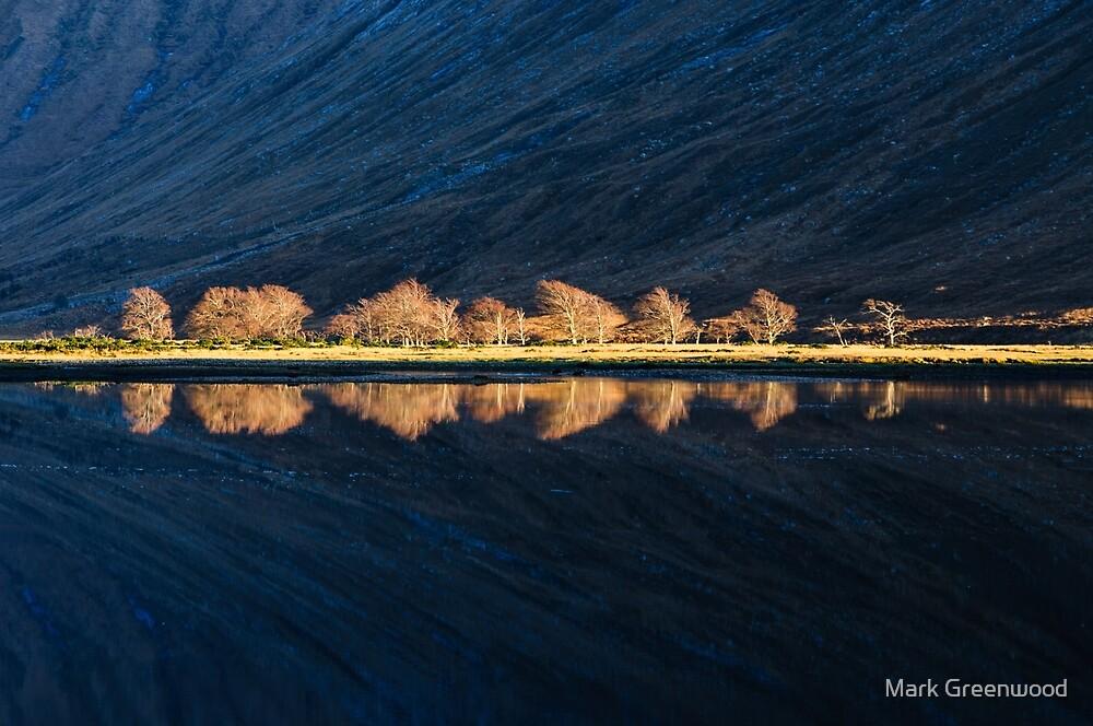 Stark Winter Trees by Mark Greenwood