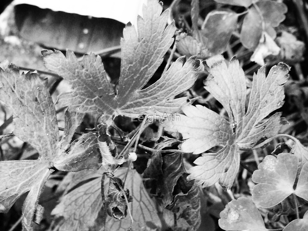 Autumn Plant by LeighAth