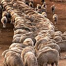 Get in line! by Paul Grinzi