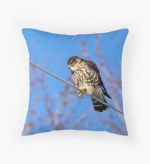 Broad-Winged Hawk Throw Pillow