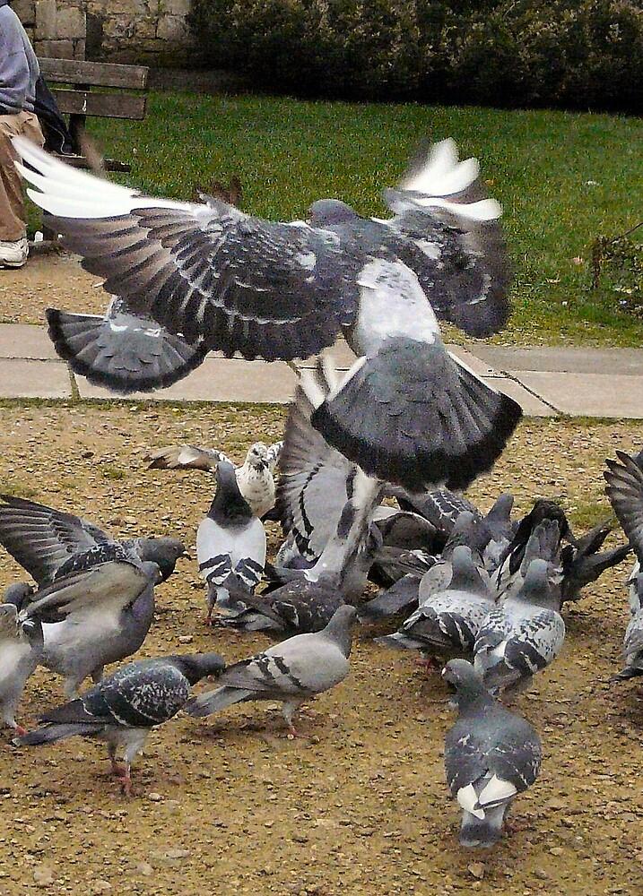 Pigeons by Zomblebee