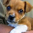Puppy Love by ienemien