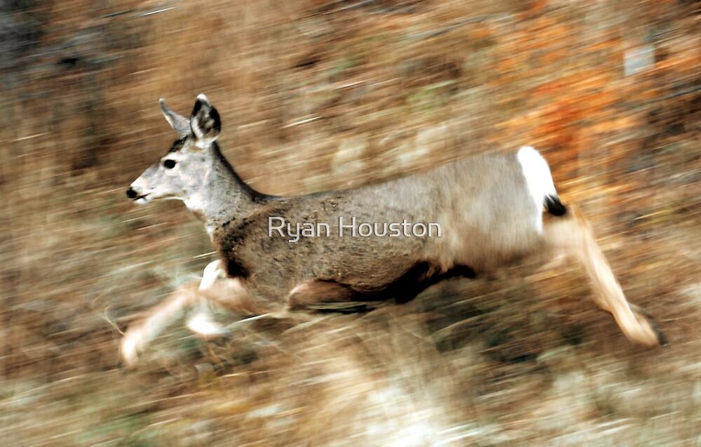 Leaping Mule Deer by Ryan Houston