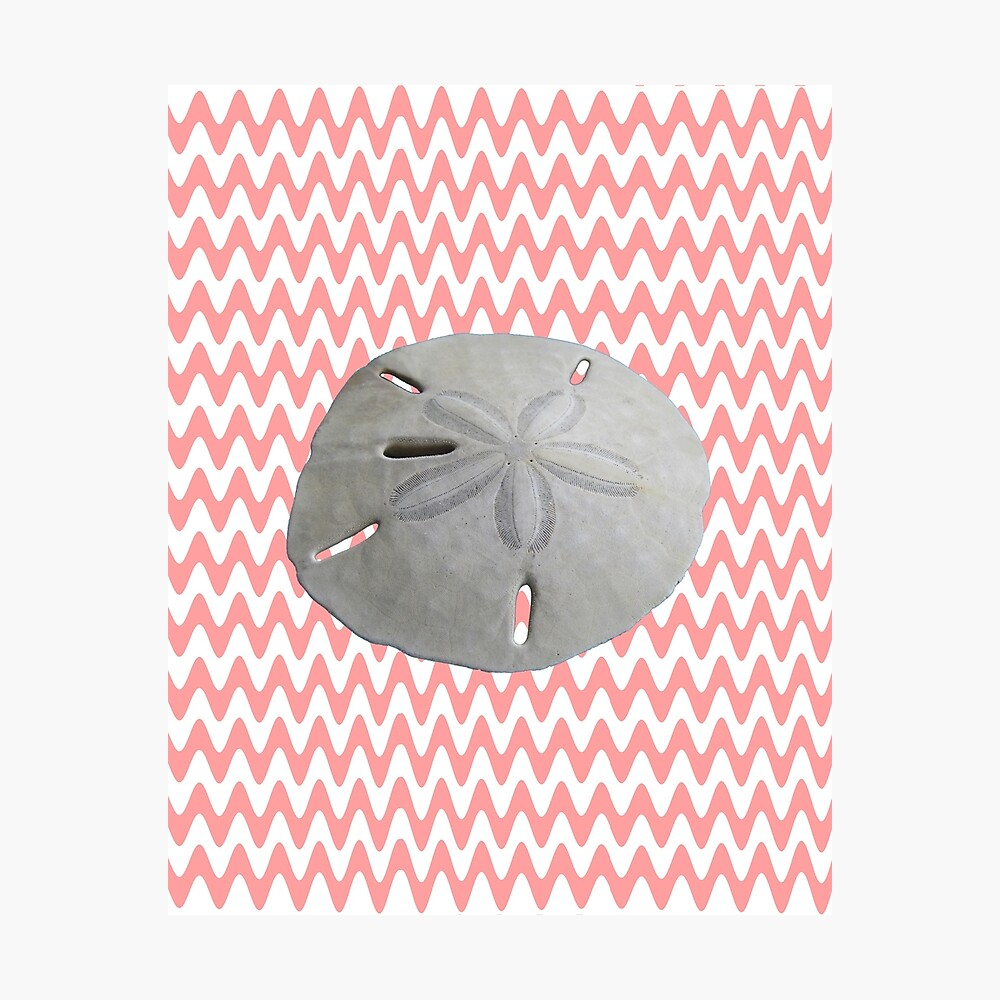 Sand Dollar Pink Waves Photographic Print