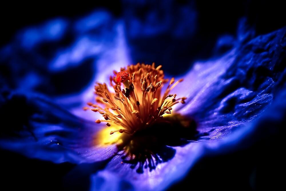 Blue Flower by Manuel Gual